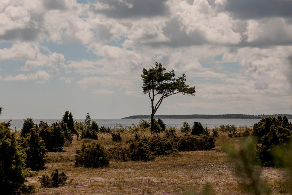 A scenic view over the terrain of Fårö a summerday