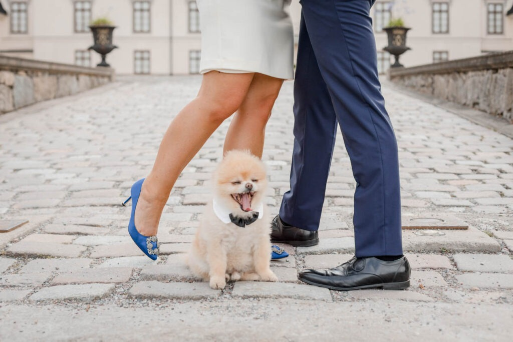 your drea wedding includes your dog, for sure
