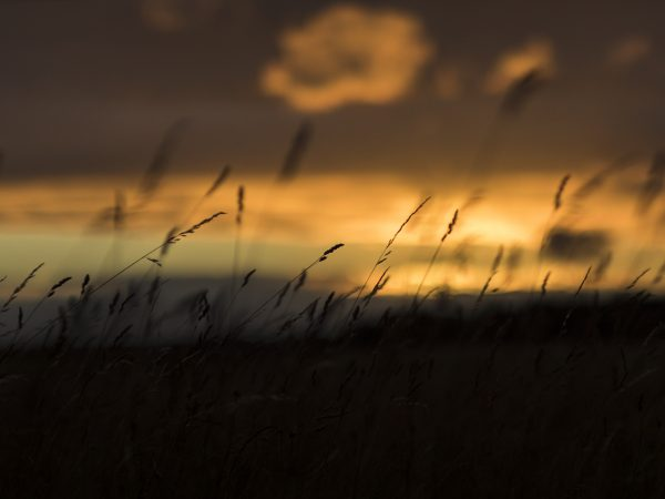 Roma sunset over the fields of Gotland